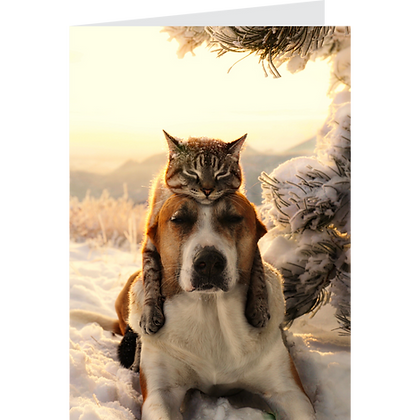 Frosty Cat Hat: Greeting Card Pack