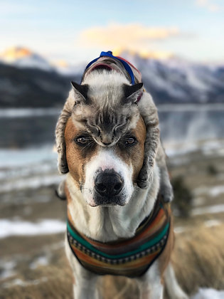 Cat Hat | Twin Lakes Print