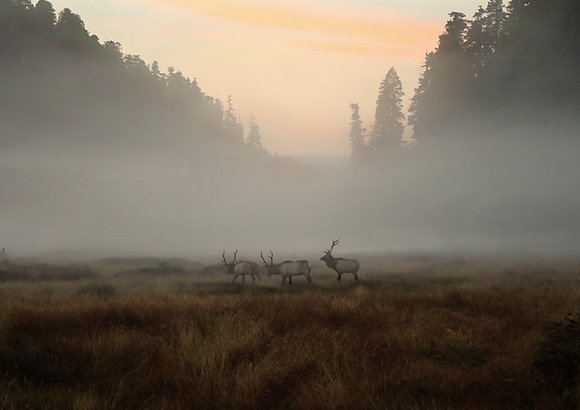 Into the Mist Print