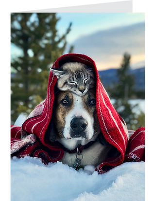 Winter Wonderland Greeting Card Pack