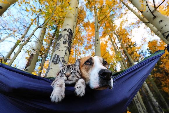 Fall Hang Print