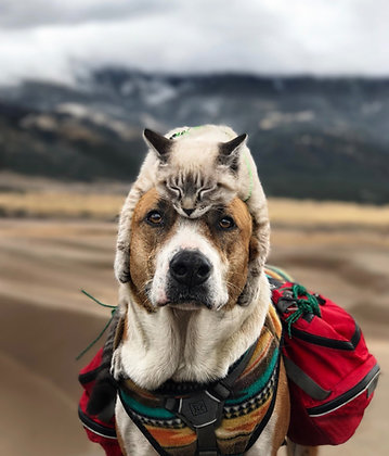 Cat Hat | Great Sand Dunes Print