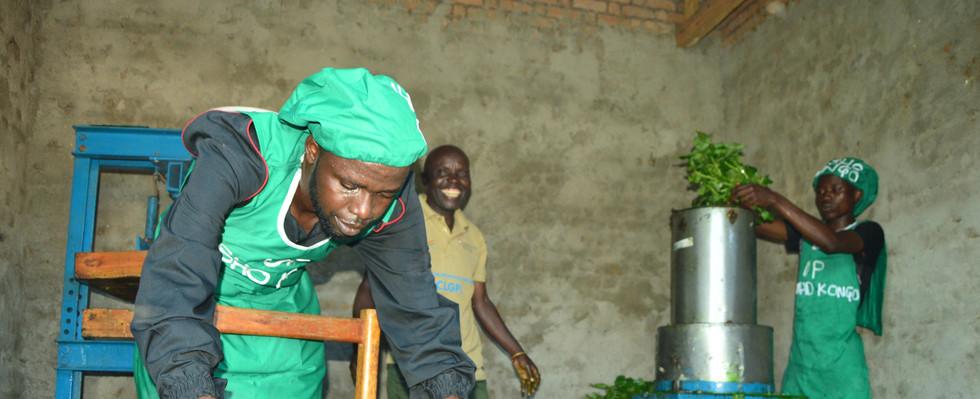 Extraction foliaire au sein de l'atelier de production d'extraits foliaires de Kesho Congo à Luvungi.