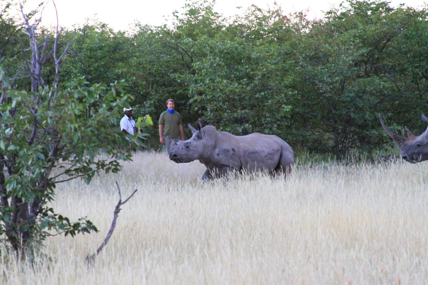 Namibia rhino.JPG