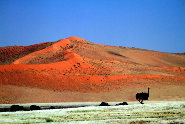 Namibia ostric.jpg