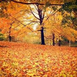 seasonal cleanups, leafs