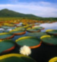 brazil-pantanal.blp-billionsluxuryportal