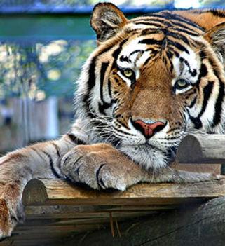 lisbon-zoo.billionsluxuryportal.jpg