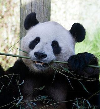 Edinburgh zoo -billionsluxuryportal.jpg