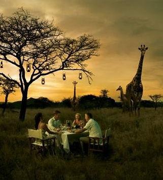 South-Africa-giraffe-blp-billionsluxuryp