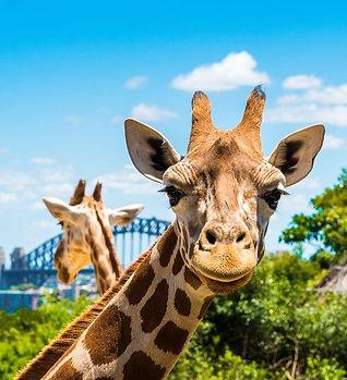 taronga-zoo-sydney.BILLIONSLUXURYPORTAL.