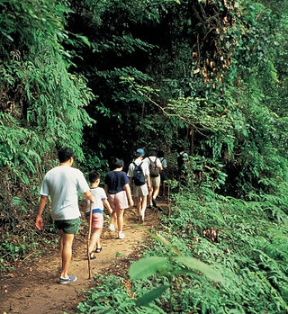 Bukit Timah Nature Reserve.jpg