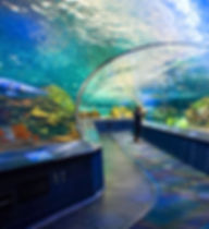 Ripley's Aquarium of Canada-BILLIONSLUXU