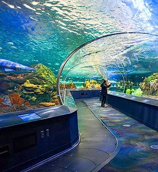 Ripley's Aquarium of Canada-BILLIONSLUXU