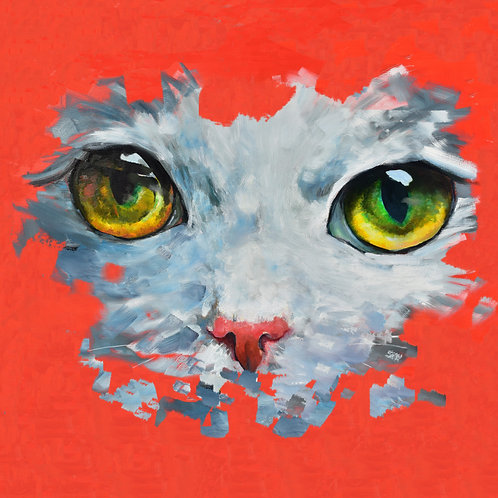 cat eyes, cat, animal face, cat face, pet, pet face