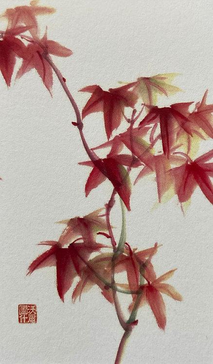 Japanese Maple Gift Card
