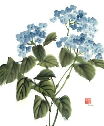 Blue-hydrangea (1)