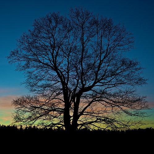 Tree Near Old Stone Church - West Boylston, MA