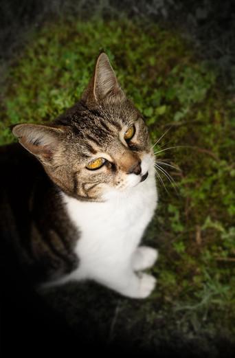 La chatte Lili photographiée par Eli Azoura ©
