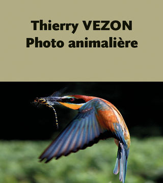 THIERRY VEZON.png