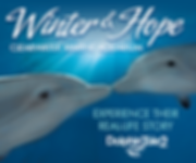 Family and Pet Guide, Clearwater Marine Aquarium, Winter and Hope, dolphins
