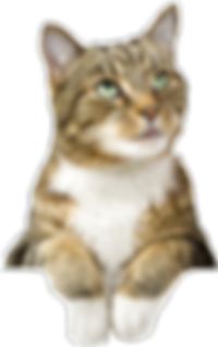 Family and Pet Guide - cat on website page footer