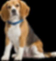 Family and Pet Guide, Florida, beagle dog