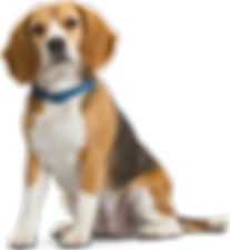 Family and Pet Guide - beagle dog
