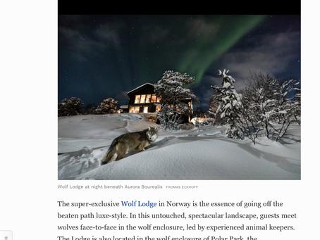 Wolf Lodge. Ulv, nordlys og de superrike