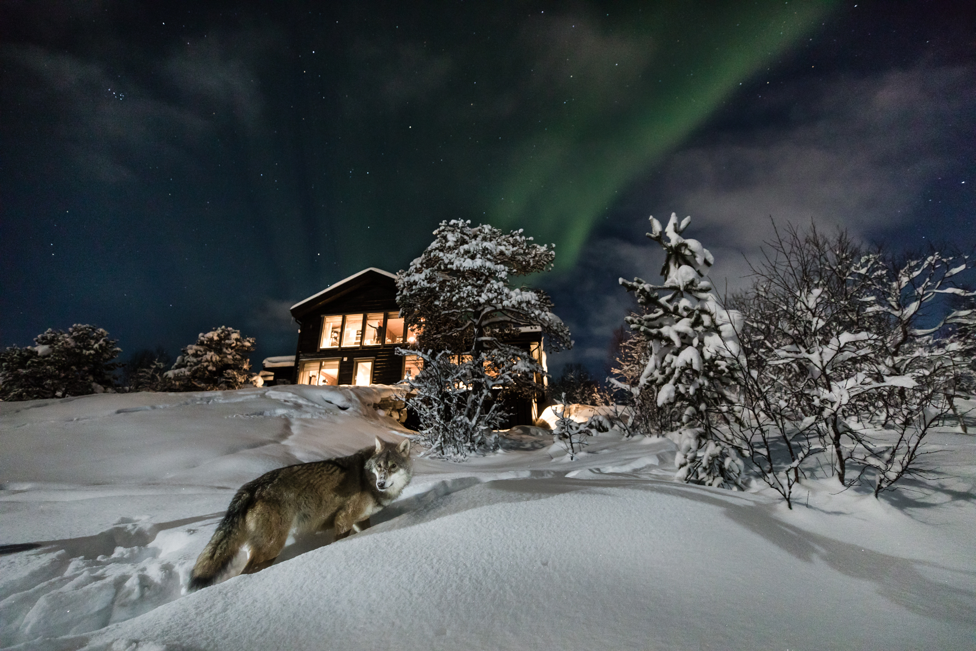 Wolf Lodge, Norway
