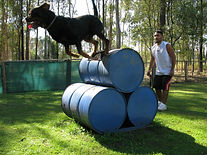 Redgums Agility Course