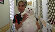 Redgum Cattery - Lots of cuddles and attention.