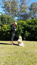 Redgum Obedience Training - All Breeds