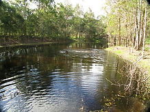 Redgums Extra Services - Swimming, Bush Walking, Agility, Playtime. Available to all boarding dogs.