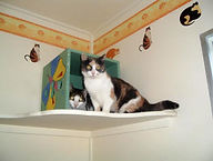 Redgum Cattery - Large Balcony Units Available