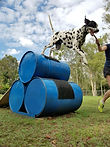 Agility for fun and fitness during your dogs stay
