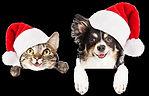 Redgum Christmas Dog & Cat.jpg
