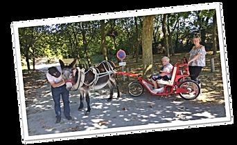 Escargoline avec un Baudet du Poitou dans le Marais Poitevin Du coq à l'âne