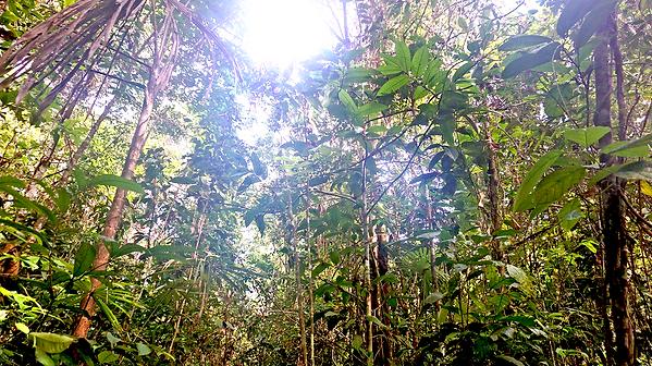 jungleretreat.png