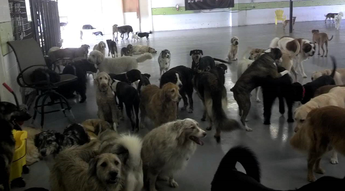 Lots of dogs milling around at the YAPS conderence centre