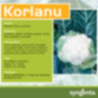 Banner Korlanu.jpg