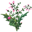 funda yaprağıv1.png