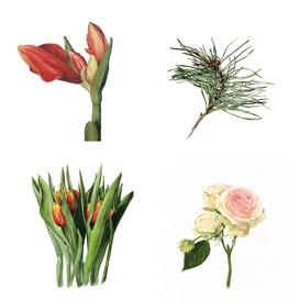 Lisa Maxwell Botanical Artist