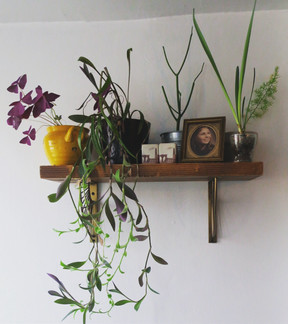 Plant Hoarder
