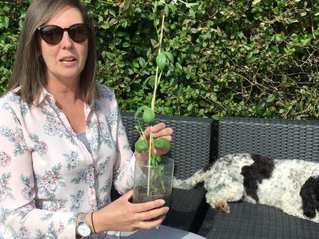 Nightingales Bean Plant News!