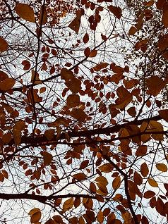 trees_wix_edited.jpg