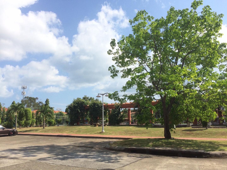 Palmeras Parque.JPG