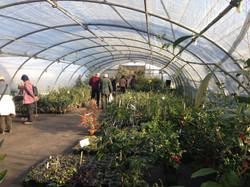 Vente de plantes à la pépinière.