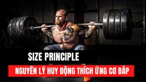 Size Principle - Nguyên lý huy động cơ bắp