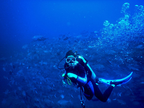 diving in Apo Island